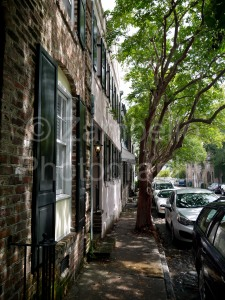 charleston, street, cobbles, cars, tree, south carolina