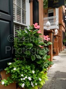 flowers, plants, windows, shutters, charleston, south carolina