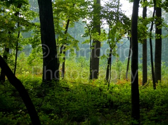 forest, green, triangle land conservancy, nature preserve, birding, trees, birds, forest, north carolina