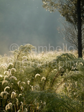 meadow, birding, birds, nature preserve, north carolina, gold, triangle land conservancy