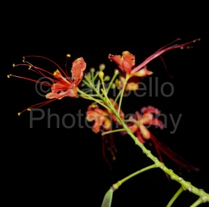 flowers, night, evening, photography, blossoms, petals, duke gardens, red, yellow