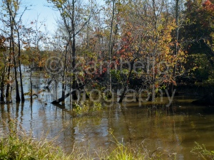 fall, autumn, foliage, leaves, orange, yellow, red, lake, water, falls lake, trees, forest