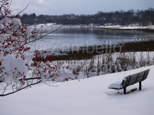 maine, snow, winter, ocean, water, portland, back cove, bench, berries
