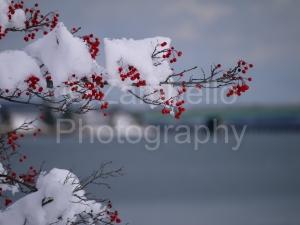 berries, portland, maine, back cove, winter, snow, ice, ocean, bridge, water