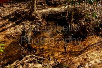 water, stream, alabama, forest