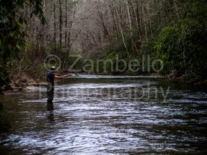 fishing, camping, pisgah, north carolina, forest, river