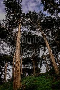 stellar's jay, golden gate park, san francisco, california