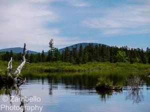 maine, lake, birding