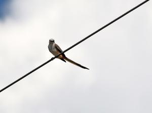 birding, kids, under five, bird