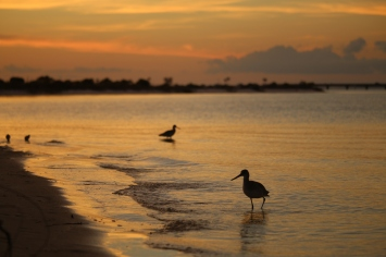 sunset, shorebird, nature, florida