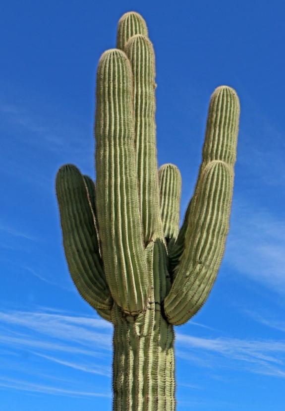 Central-Arizona Phoenix LTER
