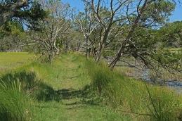 On the Sapelo Island nature trail.