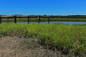 View of the marsh on Sapelo Island.