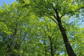 Harvard Forest