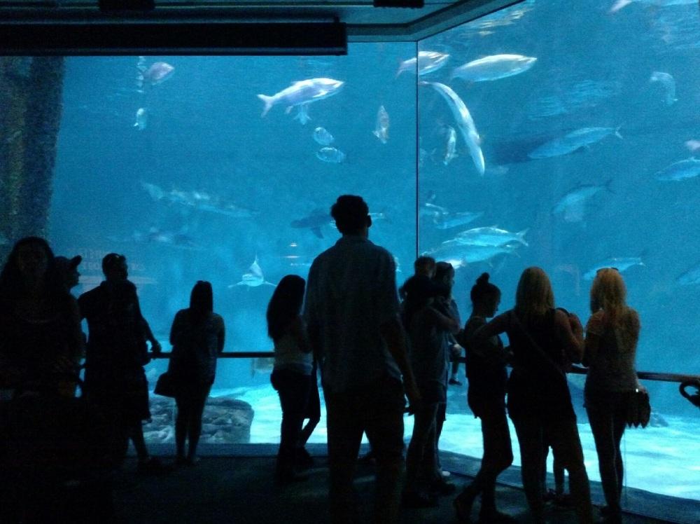 nature, aquarium, new orleans