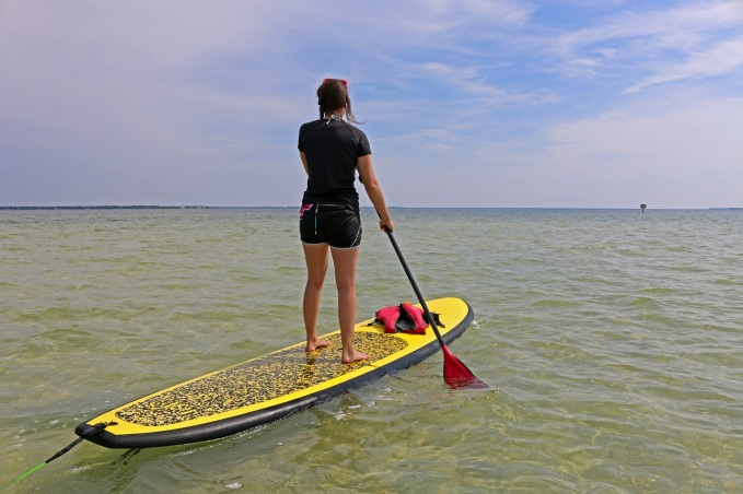 paddleboard, nature, landscape, florida