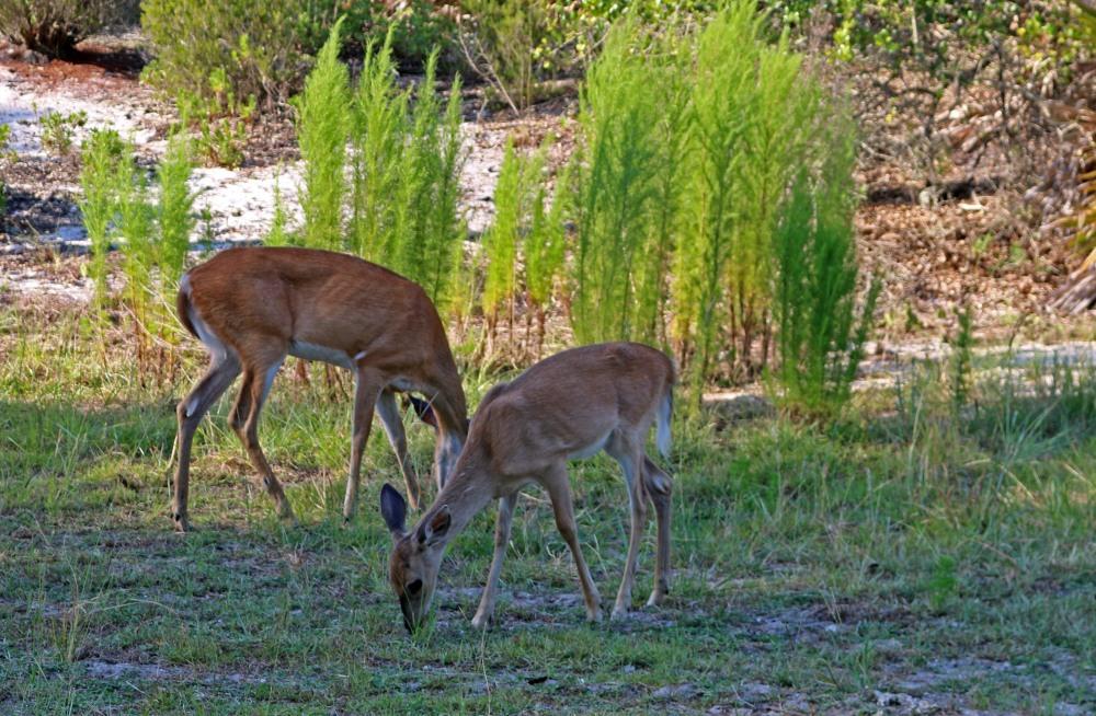 deer, nature, state park