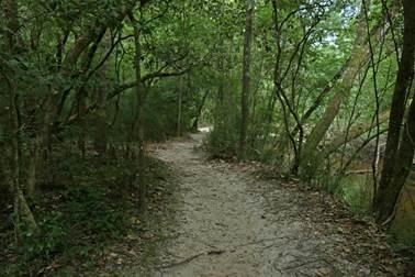 florida, nature, park