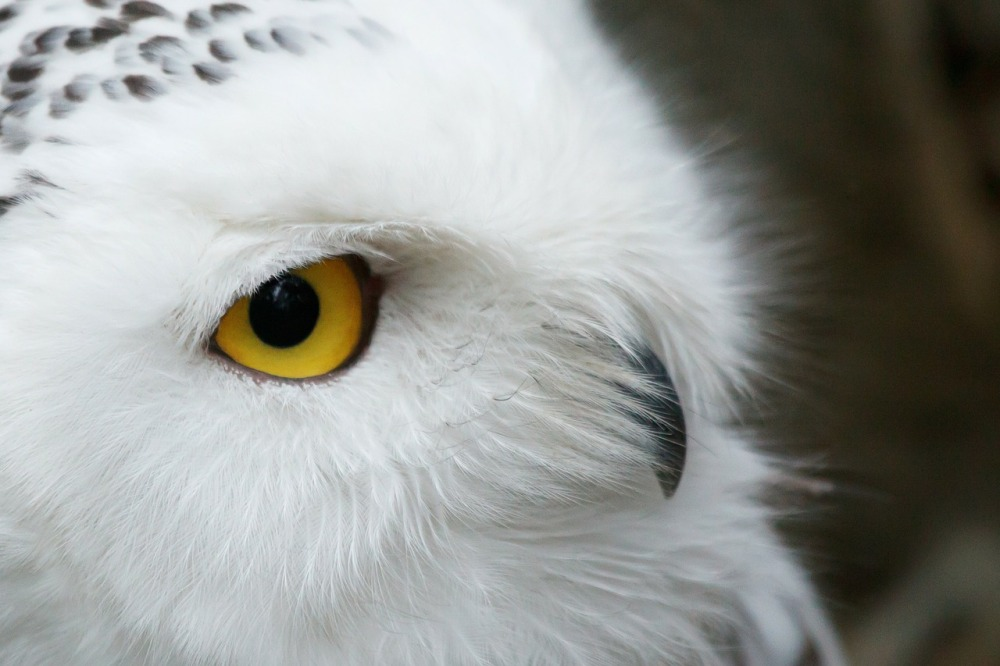 nature, landscape, maine, owl