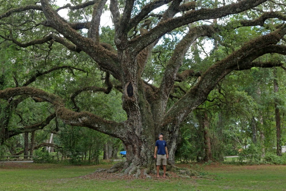 live oak, florida, nature
