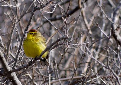 maine, nature, birding