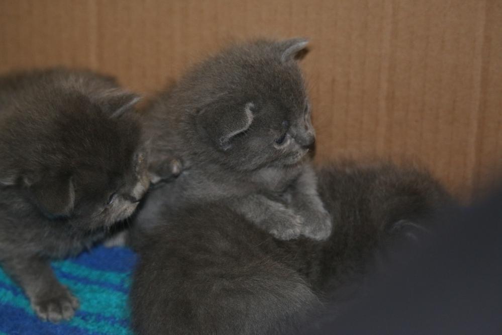 cat, kitten, nature