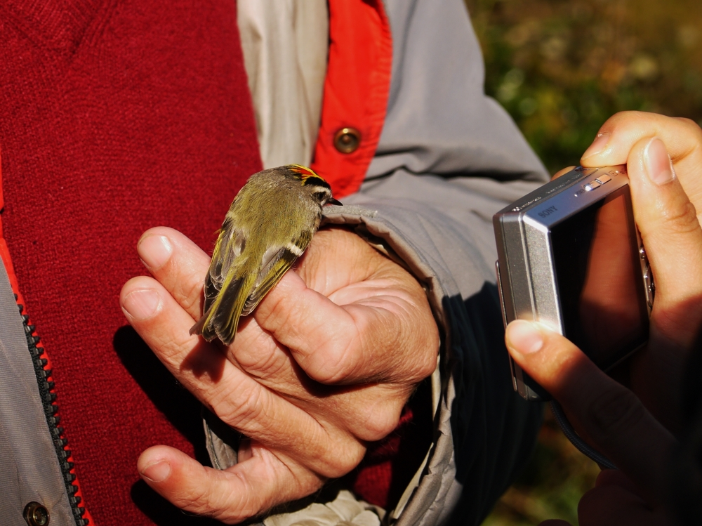 bird banding, north carolina, bird, nature