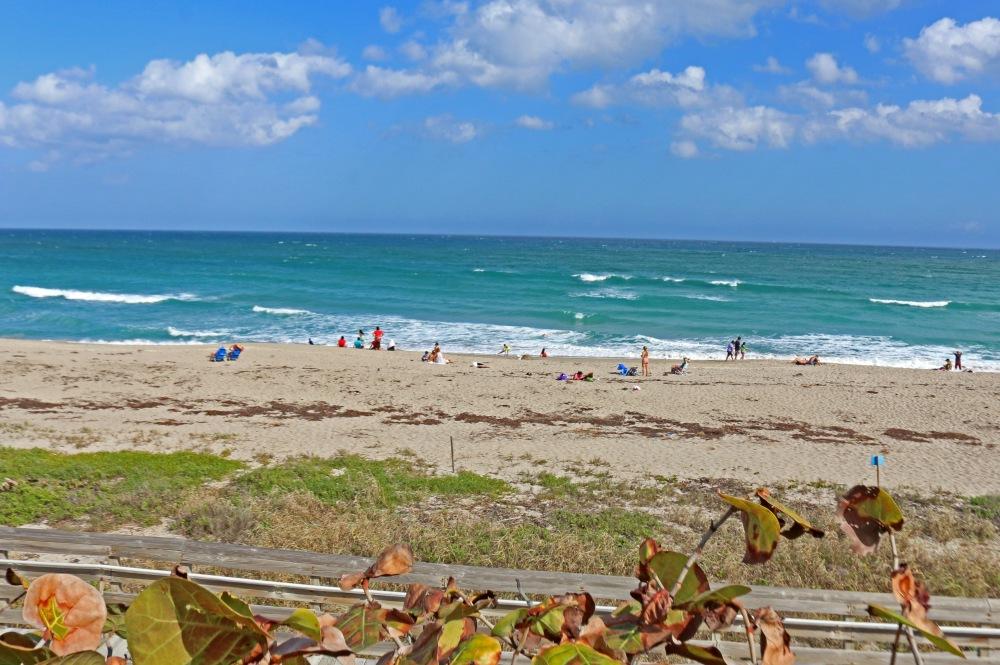 florida, nature, travel