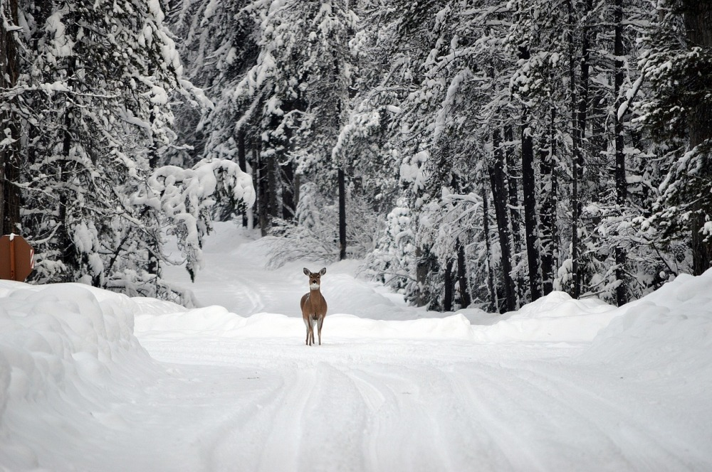 snow, winter, deer, nature