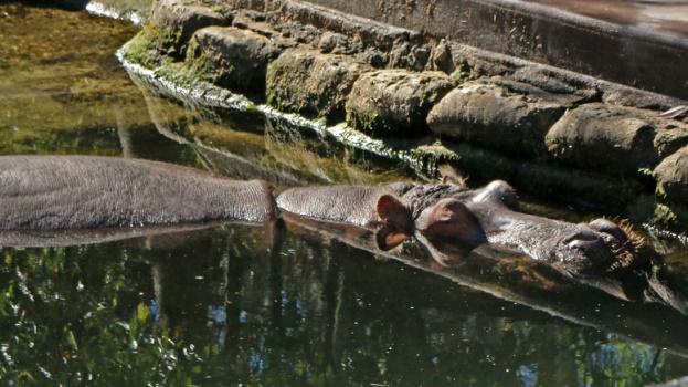 hippo, florida, park