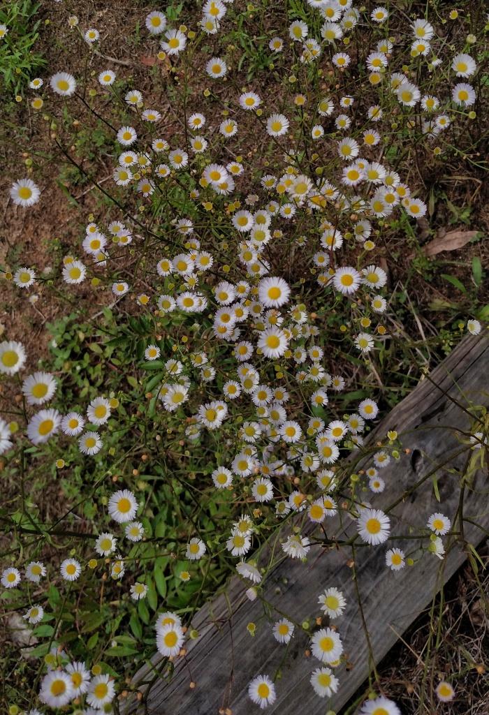 flowers, nature, landscape