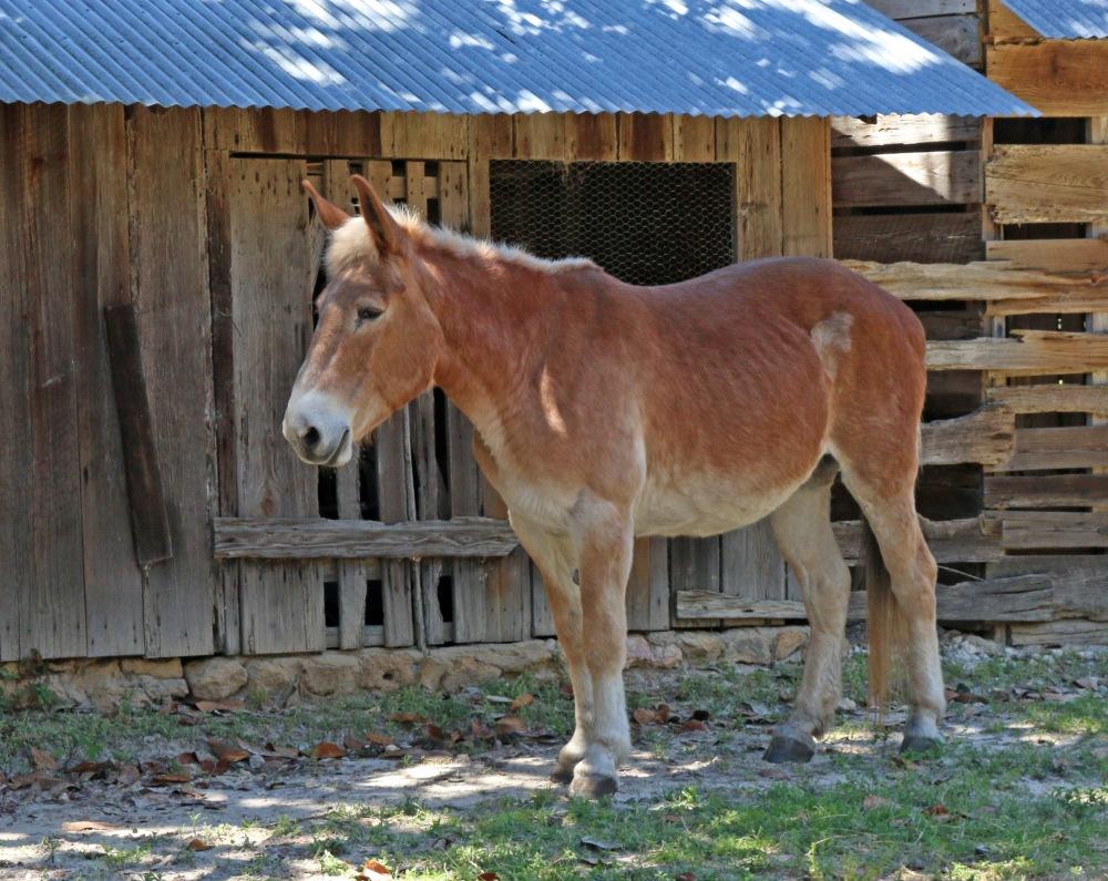 farm, donkey, florida