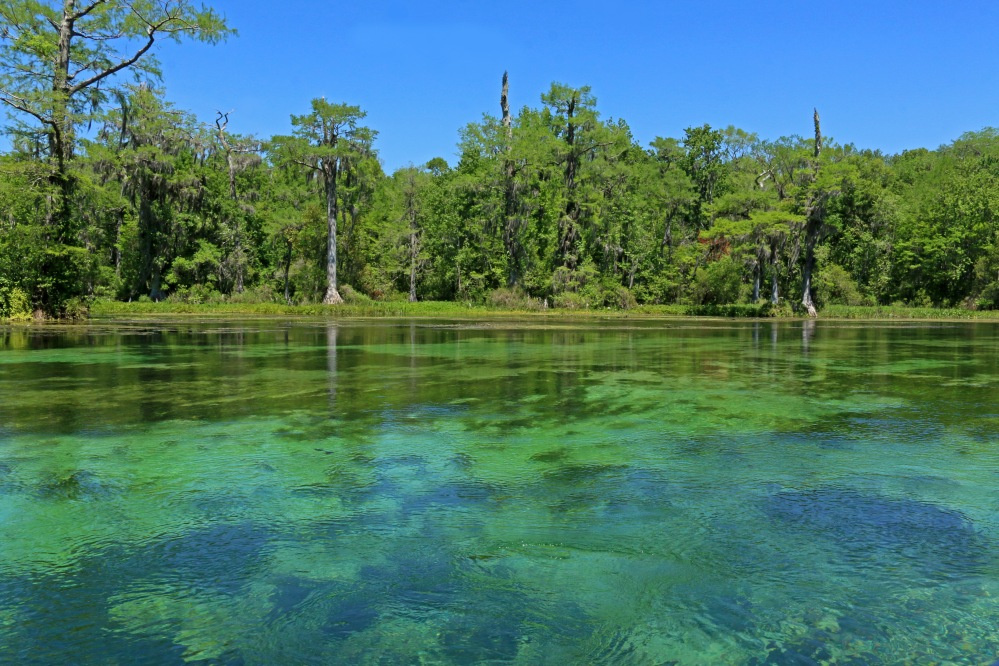 nature, landscape, florida, springs