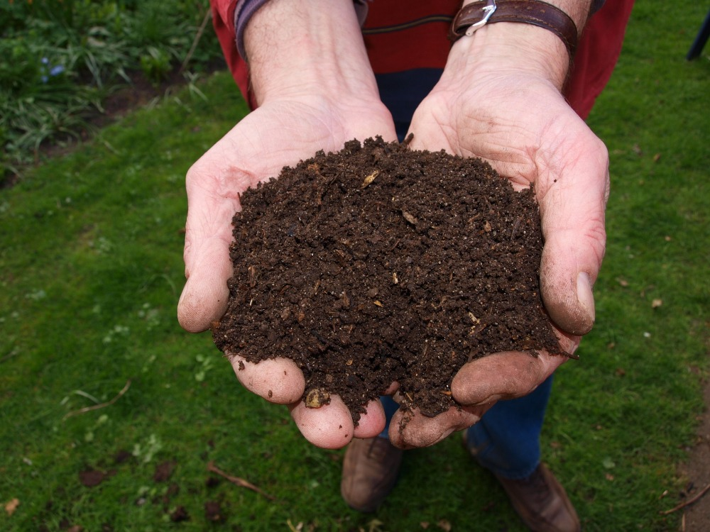 compost, nature, sustainability