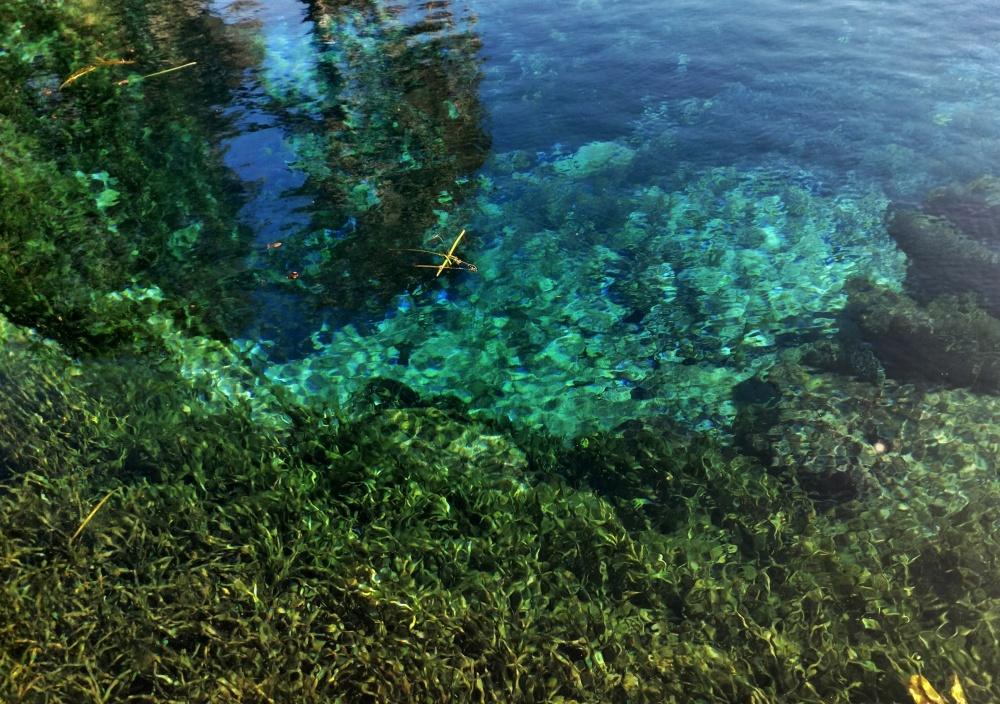 nature, springs, florida