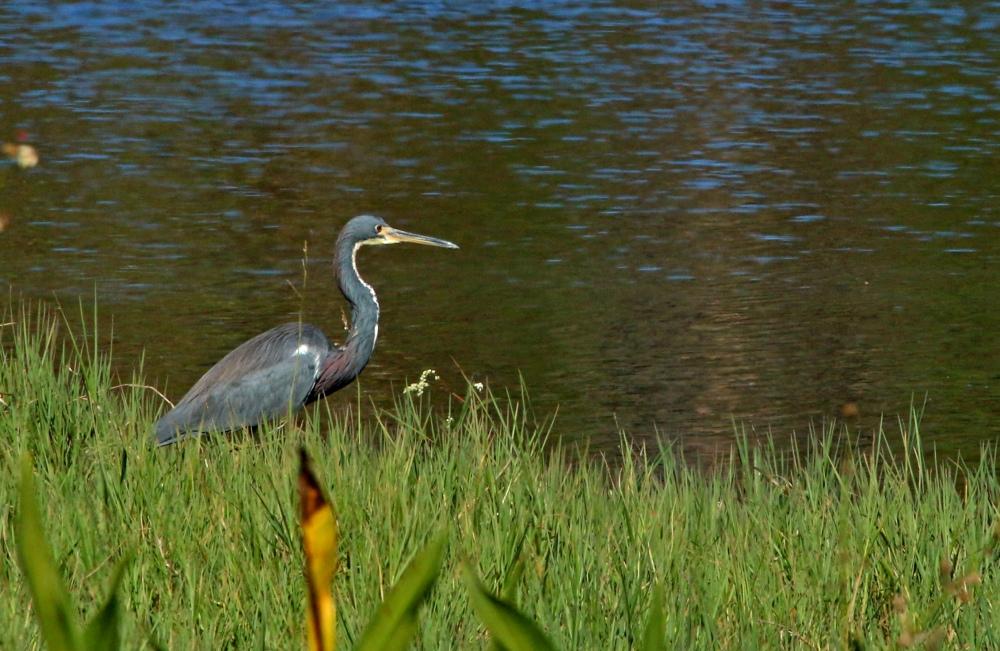 Nature, birding, florida